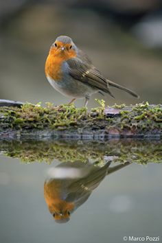 robin+in+the+mirror