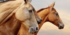 Horses Are Forced to Run Through Flames - Urge the Spanish Government to Ban the Luminarias Race!