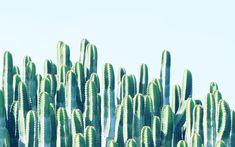 Cactus Framed Art Print by 83 Orangesa(r) Art Shop - Vector Black - Framed Art, Framed Prints, Canvas Prints, Wall Art, Wall Decal, Buy Cactus, Cactus Print, Green Cactus, Cactus Flower