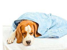 Sick dog via Shutterstock
