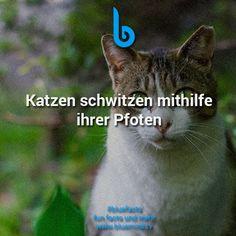 Katzen Fakt 7