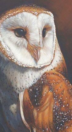 Owl Bird, Bird Art, Pet Birds, Owl Photos, Owl Pictures, Animal Paintings, Animal Drawings, Owl Drawings, Acrylic Paintings