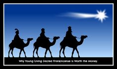 An article explaining why Young Living Sacred Frankincense is worth the money.
