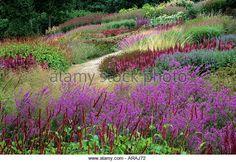 Pensthorpe Millennium Garden, Norfolk, Lythrum, persicaria, astilbe, grasses, Piet Oudolf design, pink, purple, - Stock Image