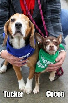 UPDATE: Adopted together on 12/26!!!!!!! ...Tucker and best friend Cocoa surrendered as elderly owner enters nursing home