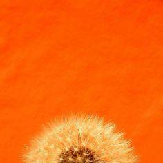 orange you a dandy?
