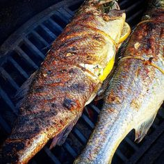 """Kick Ass Sea Bass!!! Our good friend @hooked_on_bbq grilled up these Stunning Sea Bass and took the time to share the recipe below. Thank you brother I definitely want to give this a try myself. - """"Here is something to try this weekend. I will walk you through my process for cooking whole sea bass. By grilling it whole you will get some great flavor and the fish will be extremely moist. . I coated the inside of the fish with @Code3Spices All Purpose Rescue Rub fresh garlic fresh thyme and…"""