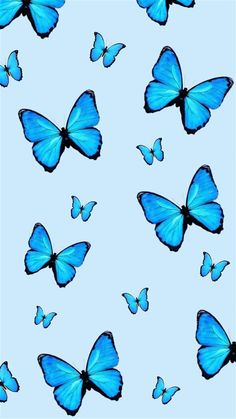 Images By Alejandra Robles On Wallpaper | Blue Butterfly