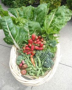 Who can name four of the fruit/veggies out of this amazing harvest?! #harvest…