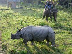 Chitwan Jungle Safari.