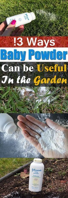 Baby powder is not only for babies; your garden loves it as well. Here're 13 Baby Powder Uses and Hacks you should try! #gardenhacks #gardentips #gardendecor