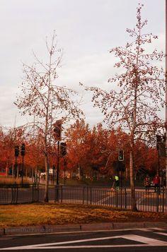 Colores otoñales en Tabancura, Santiago de Chile
