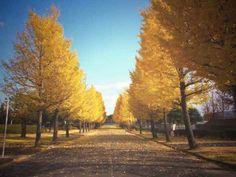 落ち葉があり、風で落ちたのかなと感じた。