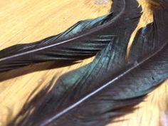 El efecto tornasol de la pluma!!