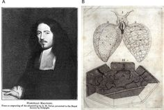 William harvey his discovery of
