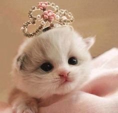 Tiny baby kitten princess!!