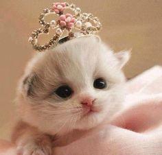 Tiny baby kitten princess!!