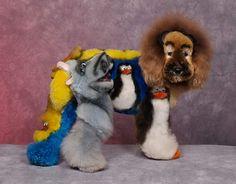 Ils teignent leurs chiens... alors qu'un simple costume ferait aussi bien!