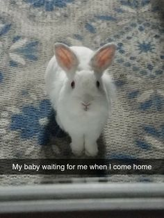 Cute Baby Bunnies, Cute Baby Animals, Animals And Pets, Cute Babies, New Zealand Rabbits, Rabbit Farm, Cute Bunny Pictures, Little Bunny Foo Foo, Kawaii Bunny