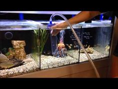 How to Clean Aquarium Gravel. Aquarium gravel serves not only as a decoration, but also as a filter. Cleaning gravel also removes some aquarium water. As such, most aquarium. Wall Aquarium, Aquarium Gravel, Glass Aquarium, Aquarium Design, Aquarium Ideas, 180 Gallon Aquarium, Self Cleaning Fish Tank, Glass Fish Tanks, Betta Fish Care