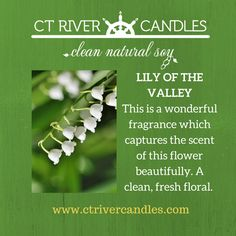 I was told by a customer this is the most realistic Lily of the Valley candle she ever smelled!!  #lilyofthevalley #soycandles #ctrivercandles #madeinct #springcandlescents #keepingitreal #connecticutsfavoritesoycandle www.ctrivercandles.com