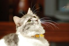 I LOVE THIS CAT SOOOOOOO MUCH :)