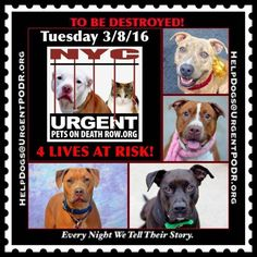TO BE DESTROYED 03/08/16 - - Info  Please Share:   Please Share! Please Share: -  Click for info & Current Status: http://nycdogs.urgentpodr.org/to-be-destroyed-4915/