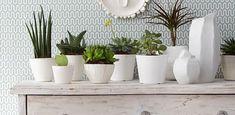 Plantas Ornamentais: Confira +35 Espécies para o Seu Jardim