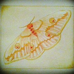 #art #drawing #sketch #pen #pencil #vintage #butterfly #yellow