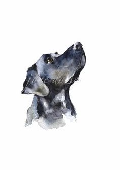 Black Labrador painted by watercolour by Jane Davies. Available as an LIMITED EDITION PRINT.