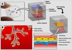 31 Best Regenerative Medicine and Cord Blood Stem Cells images in