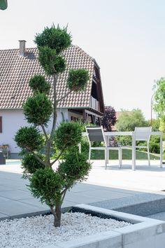 """Les végétaux topiaires sont """"LA"""" touche de graphisme qui met en valeur très souvent les jardins modernes"""