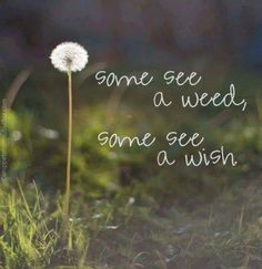 Perspective and positive mental attitude make all the difference in the world. Some see a weed, some see a wish; what do you see? Best Funny Quotes Ever, Great Quotes, Me Quotes, Motivational Quotes, Inspirational Quotes, Motivational Thoughts, Bloom Quotes, Strong Quotes, People Quotes