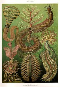 Ernst Haeckel Colored Art Print Original by NaturalistCollection