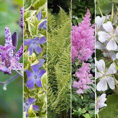 Kit de vivaces : Jardin d'ombre Potager Garden, Vegetable Garden, Kit, Green, Nature, Plantation, Plants, Outdoor, Decoration
