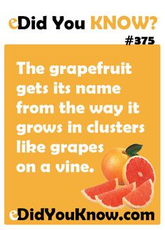 eDidYouKnow.com ► The grapefruit gets its name from the way it grows in clusters like grapes on a vine.