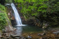 Hidden deep in the woods between Courthouse Ridge and Brushy Ridge in western Pisgah National Forest, Courthouse Creek makes a dramatic plunge through a narrow chute into a natural amphitheater of b…