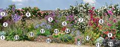 Comment fleurir un mur ensoleillé au sud dans le jardin :