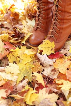 The leaves fall, the wind blows, and the farm country slowly changes from the summer cottons into its winter wools. ~Henry Beston