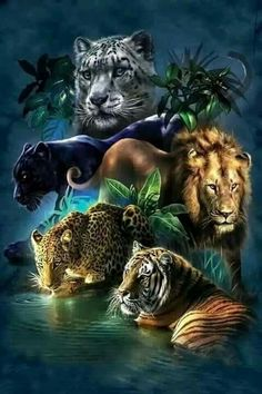 Huacan Diamond Embroidery Animals Paintings From Crystals Diamond Painting Tiger Full Square Rhinestone Diamond Mosaic Lion Beautiful Cats, Animals Beautiful, Pretty Cats, Beautiful Artwork, Beautiful Things, Grand Chat, Animals And Pets, Cute Animals, Wild Animals