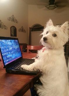 Does your Westie have more FB friends than you? (yes! It's true, my Westie has a FB page with about 5 times more friends than me :)