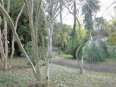 João Cruz    Fotografia 9-Natureza Viva ;  Data: 21/11/2012 ;  original ;  Tamanho: 640x480 pixéis ;  Câmara: Casio Exilim,  Tirada por João Cruz