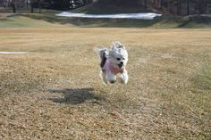 Gypsy out for a run.. Warp speed !!