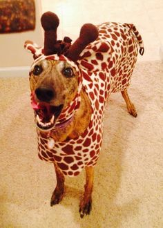 Check out my entry in Milk Bone's Halloween Pet Costume Contest. #HalloWOOF