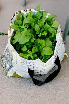Recycling garden idea!