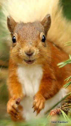 Squirrel and Fox Happy Animals, Animals And Pets, Funny Animals, Cute Animals, Amazing Animals, Animals Beautiful, Woodland Creatures, Woodland Animals, Cute Squirrel