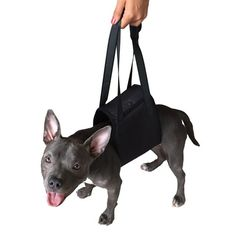 senior dog mobility aids, help to support their joints giving them the confidence to continue with their daily activities without the fear and the pain.