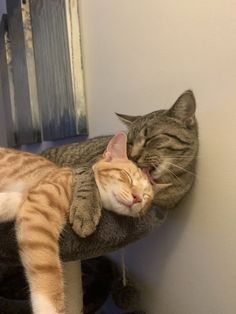 """""""They've known each other 4 days."""" Pictures Of You, Animal Pictures, Cute Pictures, Rainbow Bridge, Picture Captions, Image Macro, Animal Rescue Shelters, Alien Logo, Pet Adoption"""