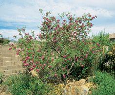 Photo Details | Arizona Municipal Water Users Association