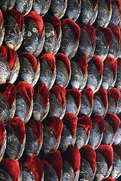 shell • susie macmurray • installation of 20,000 mussel shells inlaid with red silk-velvet covering the walls of an 18th century stairwell (detail)
